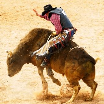 Bull Riding School in Tampa