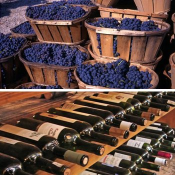 Private Winery Tour in Austin