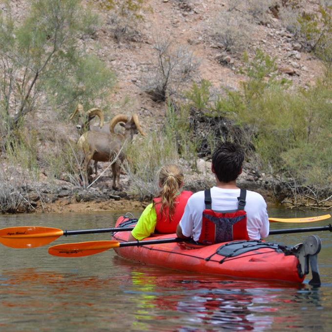 See Wildlife on Hoover Dam Kayak Tour