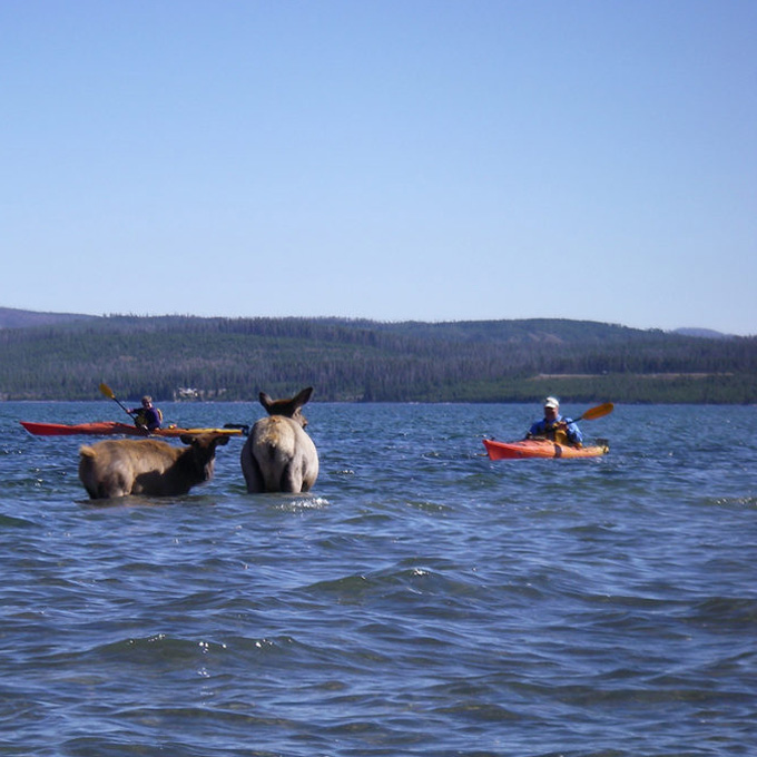 See the Wildlife from a Kayak