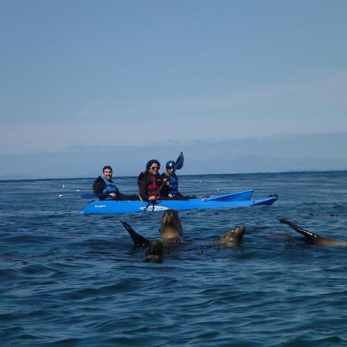Whale Watching Kayak Tour in La Jolla