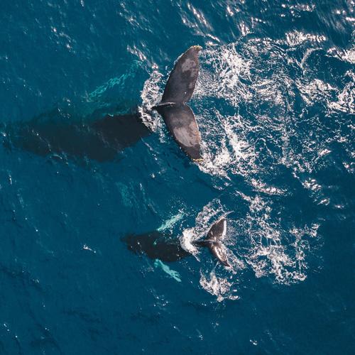 La Jolla Whale Watching Tour