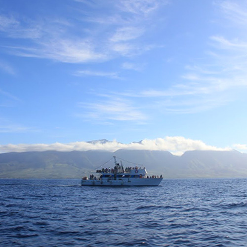 Whale Watching Cruise in Maui