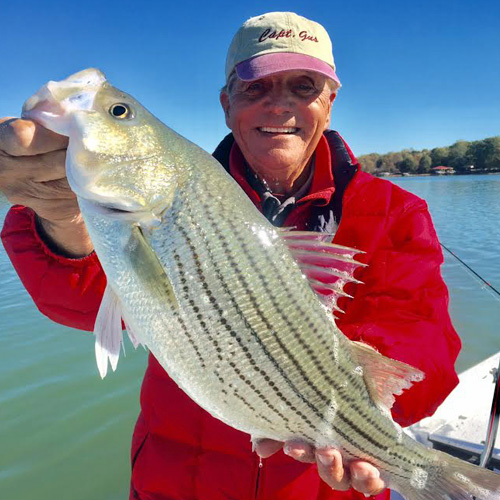 Hybrid Fishing Striped Bass on Lake Norman near Charlotte