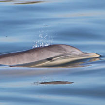 Charleston Dolphin Tour