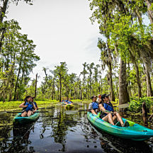 Kayak through the Swamps near New Orleans