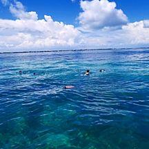 Snorkeling Tour in Islamorada Florida