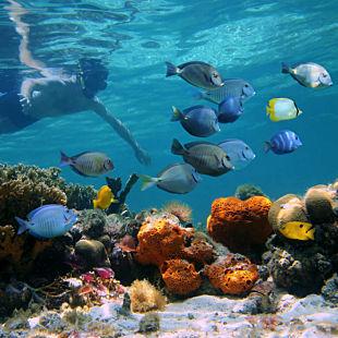 Snorkel in Key West