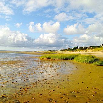 Dune Tour in Cape Cod