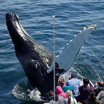 Boston Whale Watching