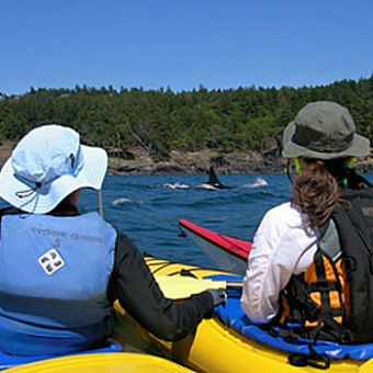 2 Day Whale Watch and Kayak Tour in Seattle