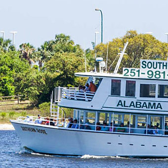 Alabama Dolphin Cruise
