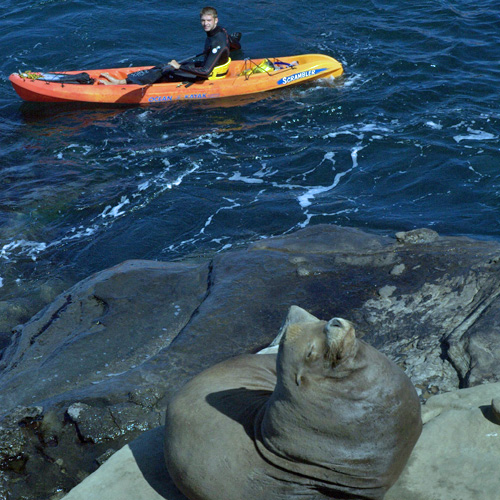 Sea Lion during Guided Kayak Tour in San Diego