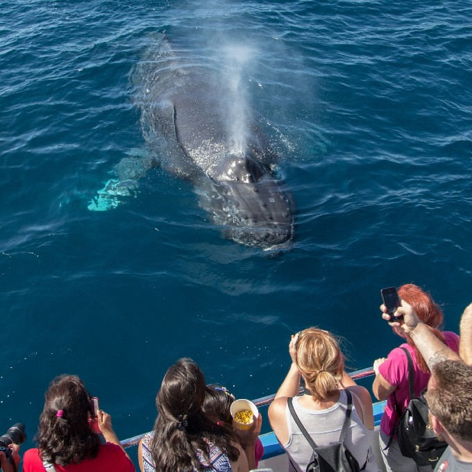 Whale Watching Cruise near Los Angeles
