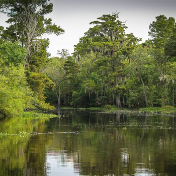 Exteme Heli Tour through the New Orleans Swamp