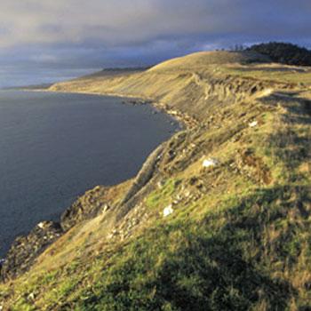San Juan Islands Orca and Eagles Kayaking Tour