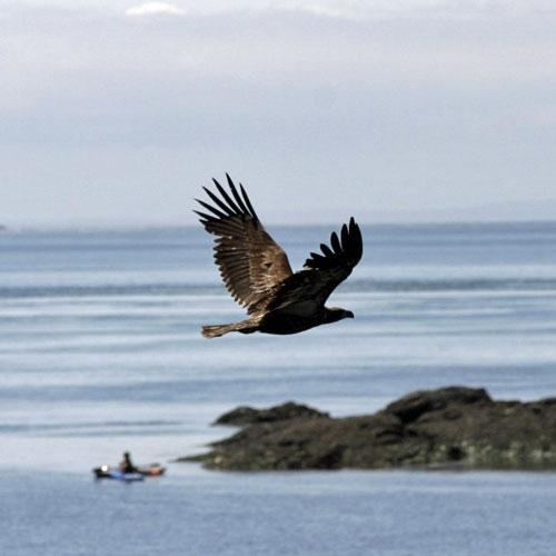 Eagle and Kayak Tour of San Juan Islands in Seattle