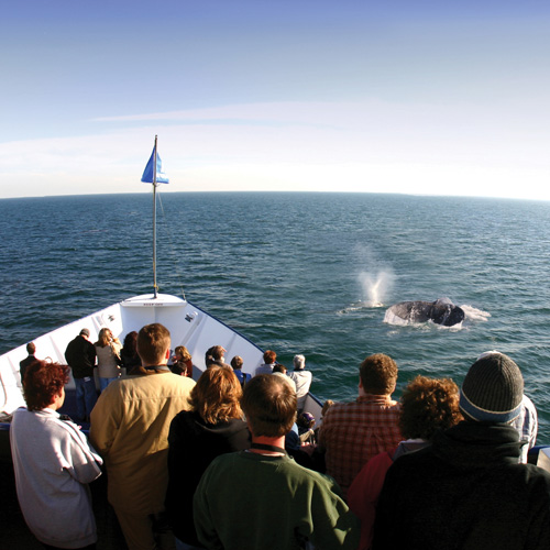 Observing a Whale on Cruise in San Diego