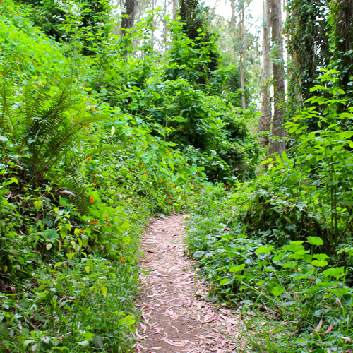 San Fran Hiking off the Beaten Path