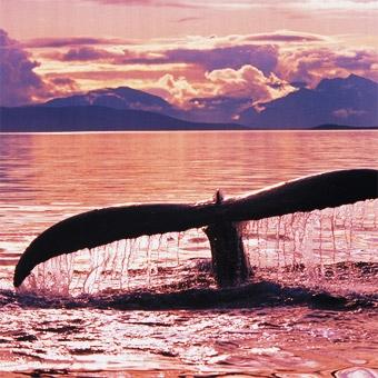 Whale Watching Kayak Tour in San Diego